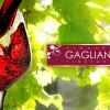 4753_VIGNOBLE GAGLIANO_001